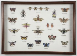 "5. Large Insect Case, 38""w x 28""h x3""d, $5500.00"